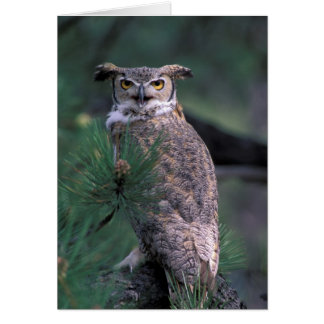 USA, CO, Colorado Springs. Great Horned Owl in Card