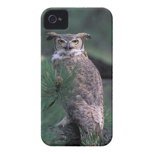 USA, CO, Colorado Springs. Great Horned Owl in Blackberry Bold Case