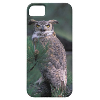 USA, CO, Colorado Springs. Great Horned Owl in iPhone SE/5/5s Case