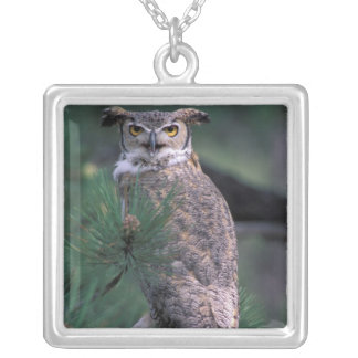 USA, CO, Colorado Springs. Great Horned Owl in Silver Plated Necklace