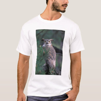USA, CO, Colorado Springs. Great Horned Owl in T-Shirt