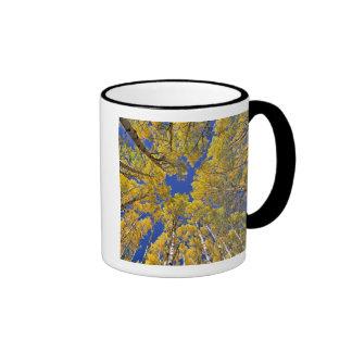 USA, Colorado, Aspen area. Aspen forest in fall Ringer Coffee Mug