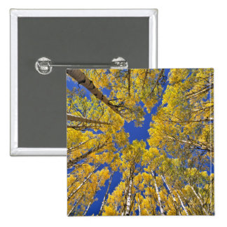 USA, Colorado, Aspen area. Aspen forest in fall Pinback Button