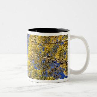 USA, Colorado, Aspen area. Aspen forest in fall Two-Tone Coffee Mug