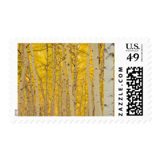 USA, Colorado. Aspens In Gunnison National Postage Stamp
