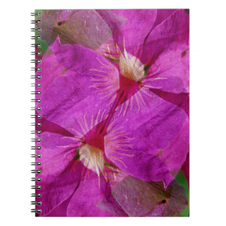 USA, Colorado, Boulder. Clematis flower montage Notebook