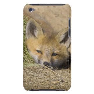 USA, Colorado, Breckenridge. Alert red fox Barely There iPod Case