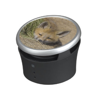 USA, Colorado, Breckenridge. Alert red fox Bluetooth Speaker