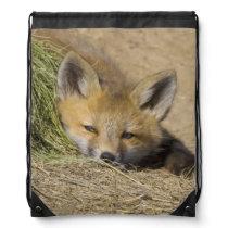 USA, Colorado, Breckenridge. Alert red fox Drawstring Backpack