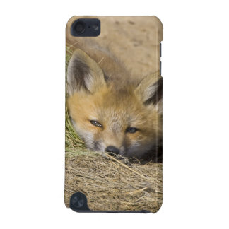 USA, Colorado, Breckenridge. Alert red fox iPod Touch 5G Case