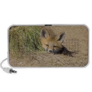 USA, Colorado, Breckenridge. Alert red fox Speaker