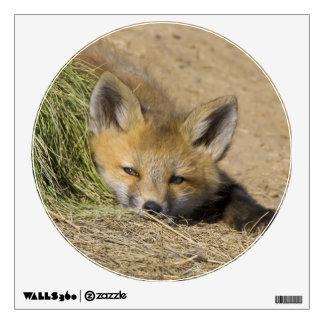 USA, Colorado, Breckenridge. Alert red fox Wall Decal