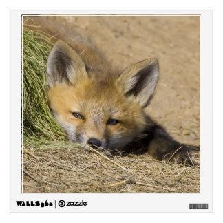 USA, Colorado, Breckenridge. Alert red fox Wall Sticker