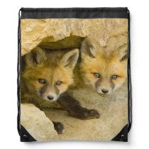 USA, Colorado, Breckenridge. Curious red fox Drawstring Backpack