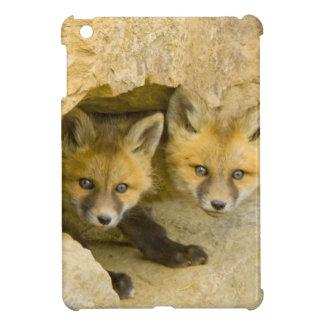 USA, Colorado, Breckenridge. Curious red fox iPad Mini Case