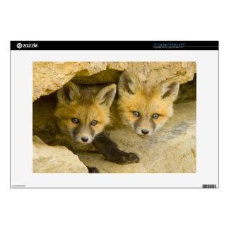 USA, Colorado, Breckenridge. Curious red fox Laptop Skins