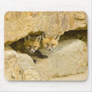 USA, Colorado, Breckenridge. Curious red fox Mouse Pad
