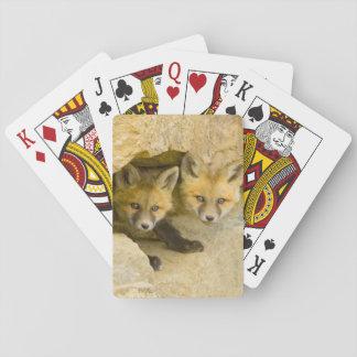 USA, Colorado, Breckenridge. Curious red fox Playing Cards