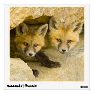USA, Colorado, Breckenridge. Curious red fox Wall Sticker
