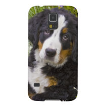 USA, Colorado, Breckenridge. Female Bernese Galaxy S5 Case