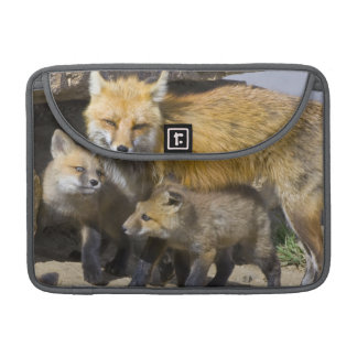 USA, Colorado, Breckenridge. Red fox mother 4 MacBook Pro Sleeve