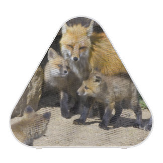 USA, Colorado, Breckenridge. Red fox mother 4 Speaker