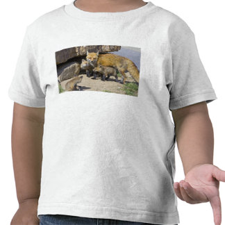 USA, Colorado, Breckenridge. Red fox mother 4 Tee Shirt