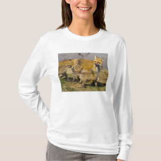 USA, Colorado, Breckenridge. Red fox mother T-Shirt