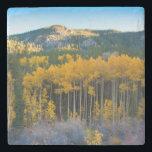 "USA, Colorado. Bright Yellow Aspens in Rockies Stone Coaster<br><div class=""desc"">Anna Miller / DanitaDelimont.com USA,  North America,  Colorado</div>"