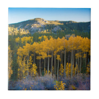 USA, Colorado. Bright Yellow Aspens in Rockies Tile