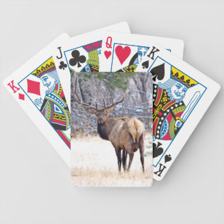 USA, Colorado, Bull Elk Looking Back Bicycle Playing Cards
