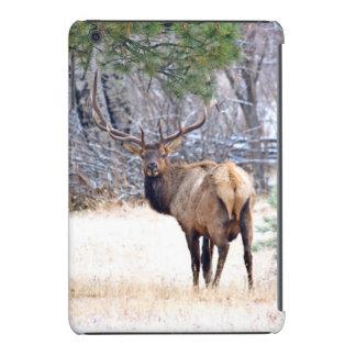 USA, Colorado, Bull Elk Looking Back iPad Mini Cases