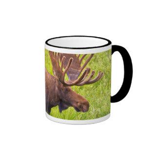 USA, Colorado, Cameron Pass. Bull Moose Ringer Mug