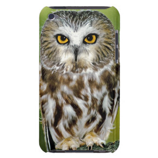 USA, Colorado. Close-up of northern saw-whet owl Barely There iPod Cases
