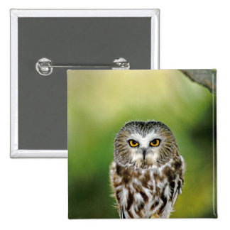 USA, Colorado. Close-up of northern saw-whet owl 2 Inch Square Button