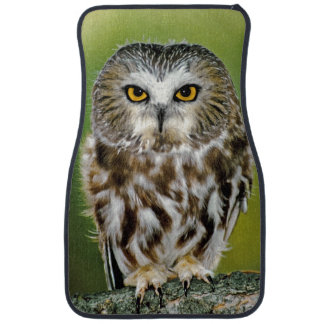 USA, Colorado. Close-up of northern saw-whet owl Car Floor Mat