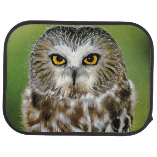 USA, Colorado. Close-up of northern saw-whet owl Car Mat