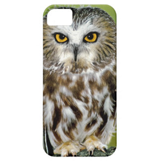 USA Colorado Close-up of northern saw-whet owl Case For iPhone 5/5S