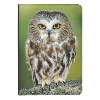 USA Colorado Close-up of northern saw-whet owl Kindle 4 Case