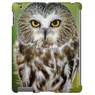 USA Colorado Close-up of northern saw-whet owl