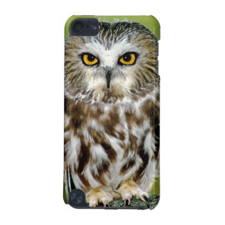 USA Colorado Close-up of northern saw-whet owl iPod Touch (5th Generation) Covers