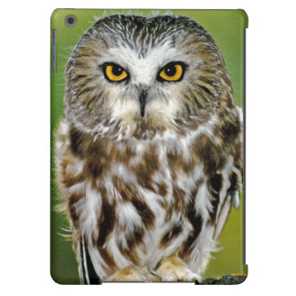 USA Colorado Close-up of northern saw-whet owl Case For iPad Air
