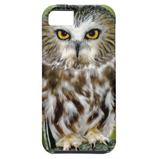 USA Colorado Close-up of northern saw-whet owl iPhone 5/5S Case