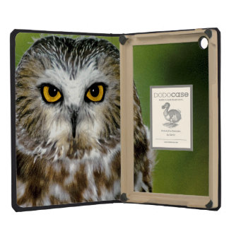USA Colorado Close-up of northern saw-whet owl iPad Mini Retina Cover