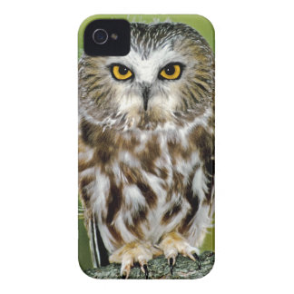 USA Colorado Close-up of northern saw-whet owl Case-Mate iPhone 4 Case