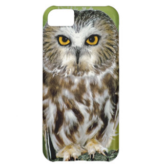 USA Colorado Close-up of northern saw-whet owl Case For iPhone 5C