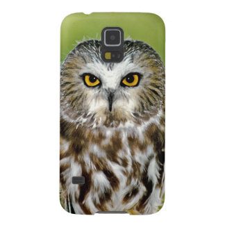 USA, Colorado. Close-up of northern saw-whet owl Case For Galaxy S5