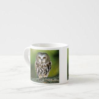 USA, Colorado. Close-up of northern saw-whet owl Espresso Cup