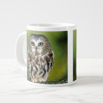 USA, Colorado. Close-up of northern saw-whet owl Giant Coffee Mug