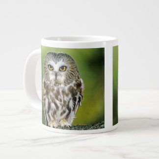 USA, Colorado. Close-up of northern saw-whet owl Giant Coffee Mug